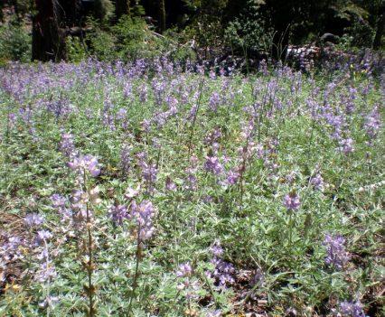 Wildflowers Along the Jake Schneider Meadow